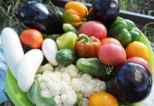 obiady wegetariańskie